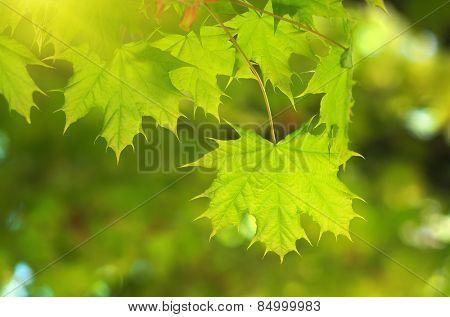 Spring leaf. Composition of nature.