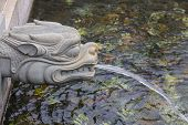 foto of dragon-fish  - Dragon statue water spray - JPG