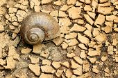 stock photo of drought  - Snails die on the soil of the summer drought - JPG