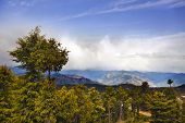 image of himachal pradesh  - Trees with mountain range in the background - JPG