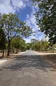picture of jain  - Trees along a road - JPG