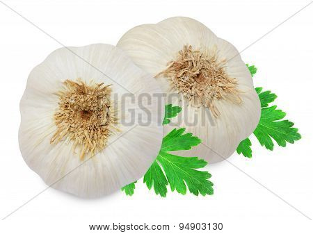 Head of garlic and clove with sprig of parsley