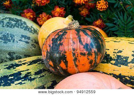 Pumpkins And Marigolds