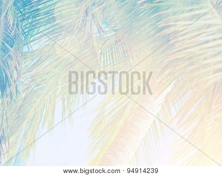 Beautiful tropical vintage background, palm leaves in bright sun light, fresh green exotic tree on blue sky backdrop, summer vacation concept