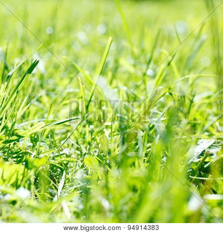 spring green grass at the park