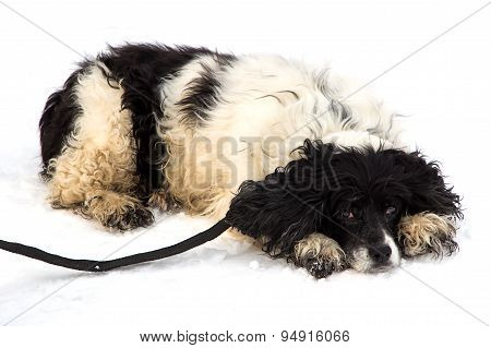 Photo of black and white mongrel dog