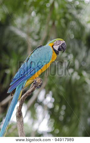 Exotic Bird. Blue Parrot Sit On A Branch Tree. Wildlife Bali, Indonesia