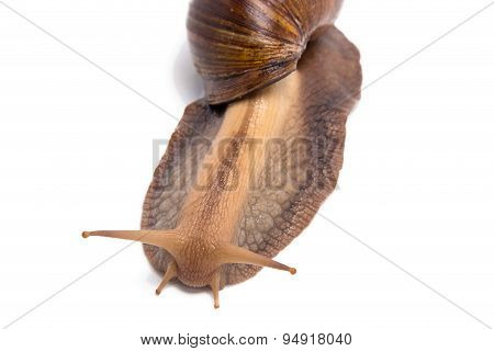 Photo of big snail on top