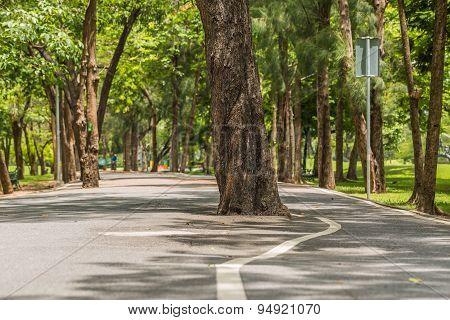 Tree In Middle Of The Road