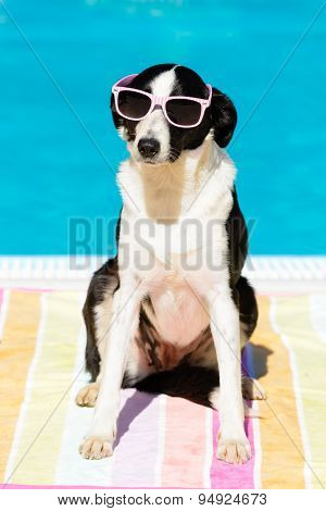 Funny Dog With Sunglasses On Summer At Swimming Pool