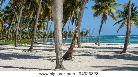 White Sand Beach And Coconut Trees On Saona Island.
