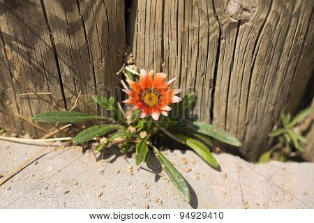 Flush Of Orange Colored Flowers Closeup Through Curbstone