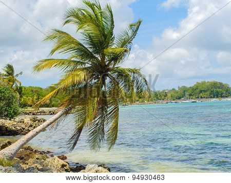 Beautiful Coconut Palm On The Beach