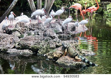 Iguana And Flamingo Birds
