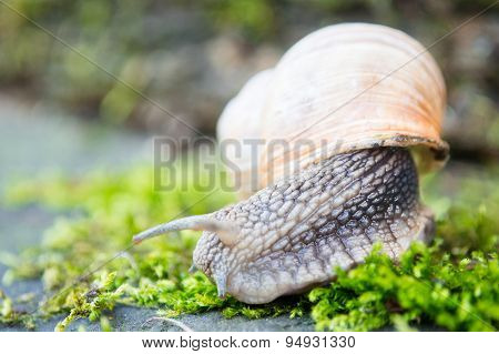 snail in the moss