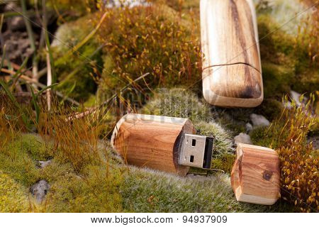 USB hard drive flash sticks in wooden cladding on moss