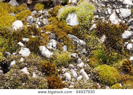 Green moss and white stones macro scene