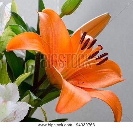 Beautiful Day Lily