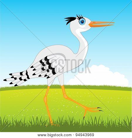 Stork on glade