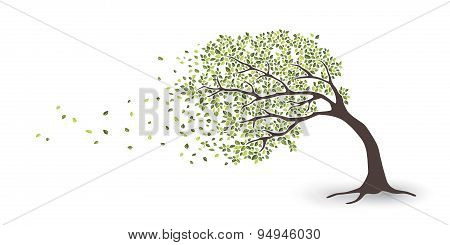 Tree In Storm