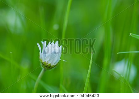 Lonely Meadow Flowers