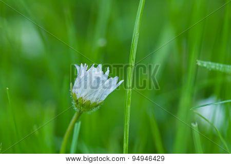 Lonely Meadow Flowers In Green
