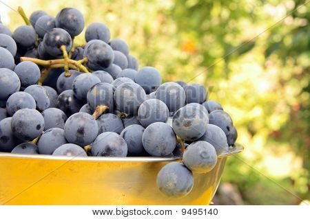 Fresh Violet Grapes On Bawl