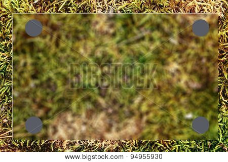 Green Grass As Blur Background