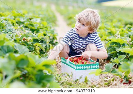 Little Kid Boy Picking Strawberries On Farm, Outdoors.