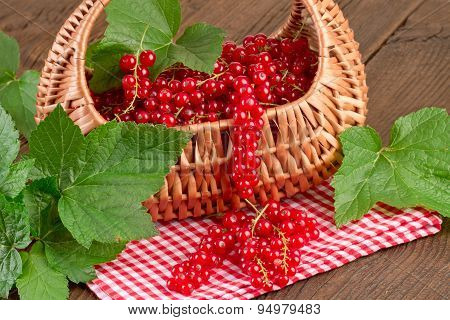 Redcurrant on red checkered tablecloth
