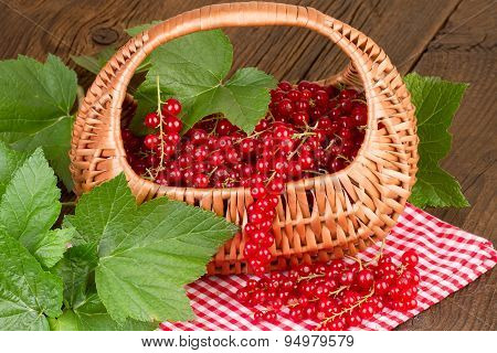 Redcurrant in basket on red checkered tablecloth