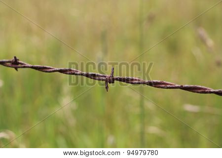 Barbed wire with grassy background