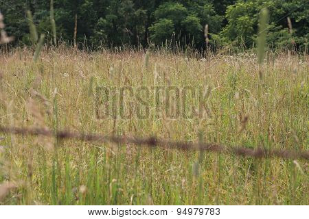 Tall grass in a country field