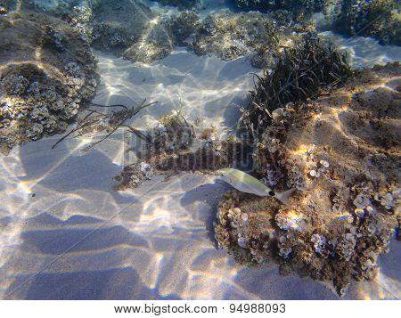 Underwater Beach Bottom And A Fish