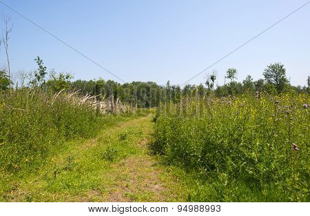 Footpath through nature in summer