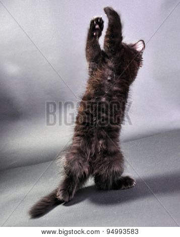 Small Black Kitten Jumping