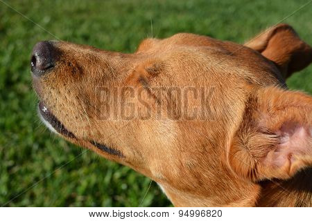 Dog Enjoying Sun on Her Face