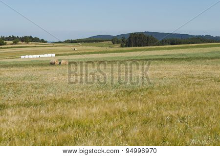 Hot summer day at a corn field. The landscape in the Czech Republic.