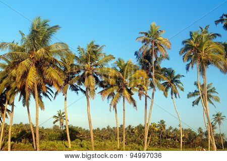 Palm Trees At Sky Background