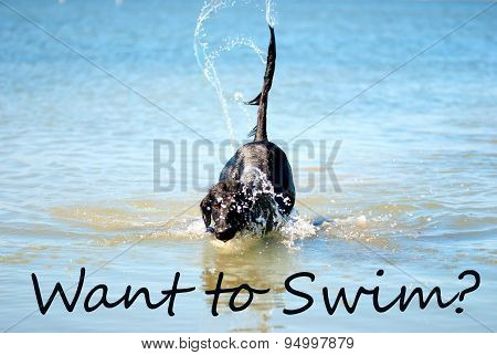 Black Dog Playing In The Ocean Want To Swim