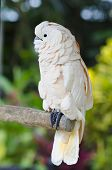 image of cockatoos  - Exotic bird - JPG
