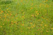foto of cosmos flowers  - Field of colorful cosmos flowers - JPG