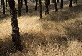 pic of dry grass  - natural floral background with dry grasses and stone pine trunks - JPG