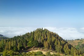 picture of burro  - Inland Gran Canaria view over the tree tops towards cloud cover on the north of the isalnd - JPG