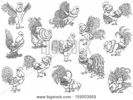 Set roosters black contour line on white background. Different characters. Fiery chicken a symbol of the Chinese new year 2017. Vector illustration. Vintage.