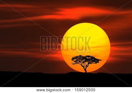 Circle Of Life. Summer landscape, big sun