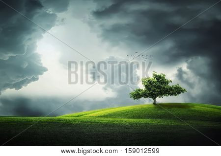 Lonely tree, Beautiful landscape . summer , tree