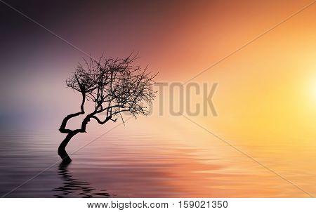 Lonely tree on lake. Summer landscape. sunset