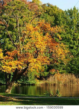 Natur. Herbst. Die warmen Farben. Urlaub. Ein Spaziergang. Dorf. sonnigen Tag. San Souci.