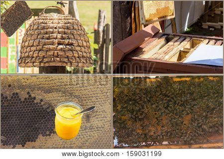 Beekeeping and honey production workflow: from the harvesting to the finished honey.